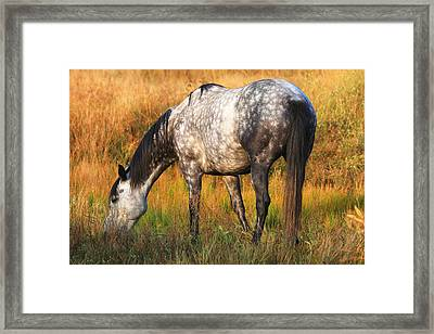Dapple Grey Framed Print by Donna Kennedy