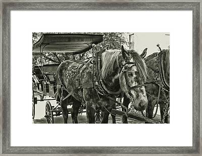 Dapple Grey Framed Print
