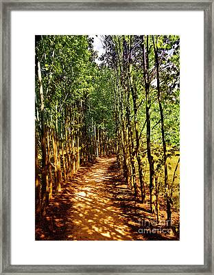Dappled Days Framed Print by Madeline Ellis