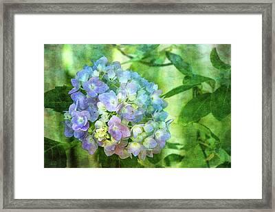 Dappled Light Hydrangea 2300 Idp_2 Framed Print