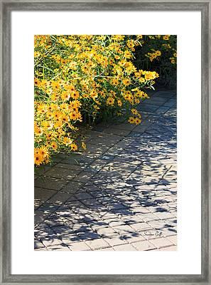 Dappled Light II Framed Print by Suzanne Gaff