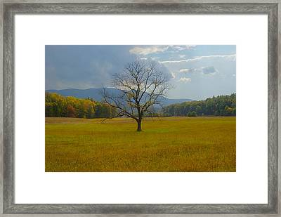 Dare To Stand Alone Framed Print by Michael Peychich