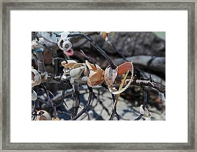 Framed Print featuring the photograph Dare To Touch by Michiale Schneider