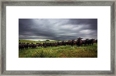 Dark Angus Framed Print