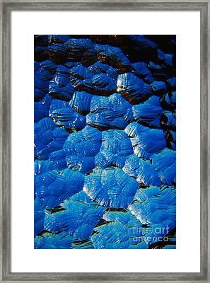Dark Blue Framed Print by Hideaki Sakurai