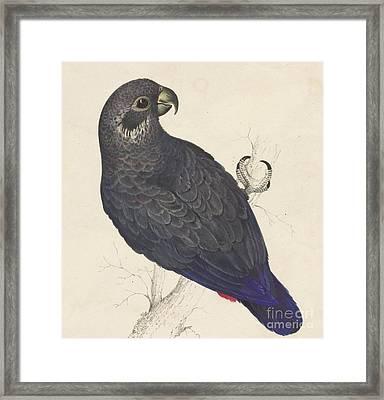 Dark Blue Parrot Framed Print