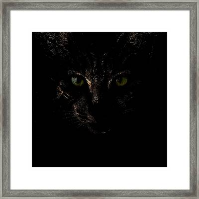 Framed Print featuring the photograph Dark Knight by Helga Novelli
