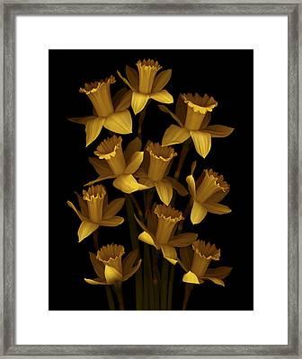 Dark Daffodils Framed Print