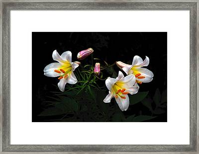 Framed Print featuring the photograph Dark Day Bright Lilies by Byron Varvarigos