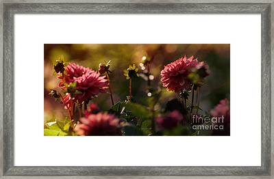 Dark Days  Framed Print by Maria Janicki
