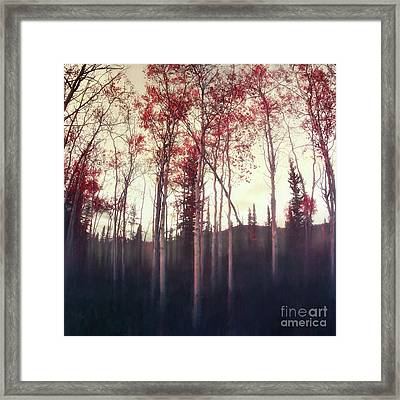 Dark Deep Woods Framed Print