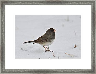 Framed Print featuring the photograph Dark-eyed Junco 1217 by Michael Peychich