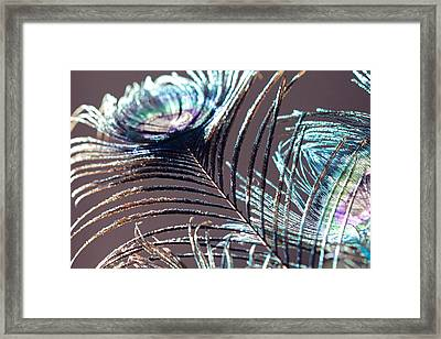 Dark Feathers Framed Print