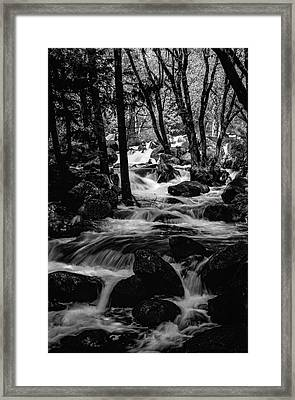 Dark Forest Bright Water Framed Print