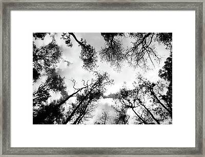 Dark Forest Framed Print by Janzgrossetkino