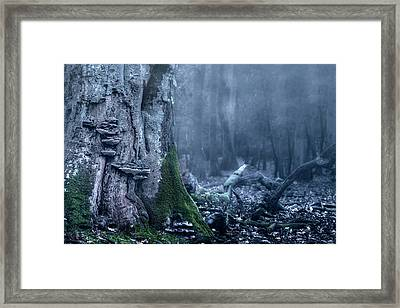 Dark Forest Framed Print by Joana Kruse