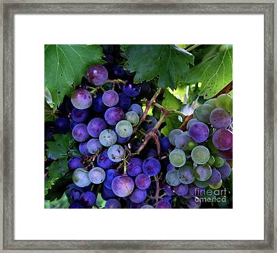 Framed Print featuring the photograph Dark Grapes by Carol Sweetwood
