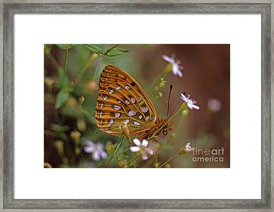 Dark Green Fritillary In The Meadow Framed Print by Sverre Andreas Fekjan