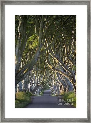 Dark Hedges Dawn Framed Print by Brian Jannsen