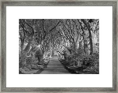 Dark Hedges Ireland Framed Print by Patrick McGill