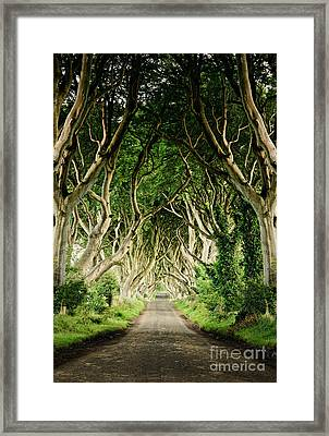 Dark Hedges Framed Print by Michelle McMahon