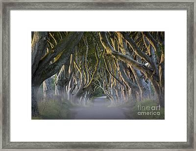 Dark Hedges - Misty Morning Framed Print by Brian Jannsen