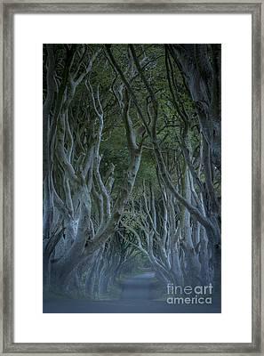 Dark Hedges - Misty Night Framed Print by Brian Jannsen