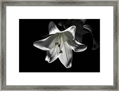 Dark Lilly Framed Print