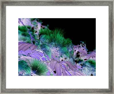Dark Mimosa II Framed Print by James Granberry