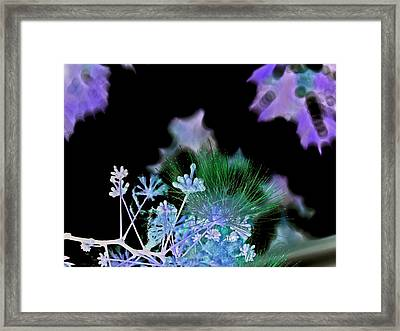 Dark Mimosa IIi Framed Print by James Granberry