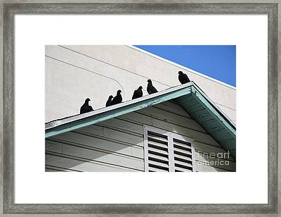 Dark Pigeons Framed Print