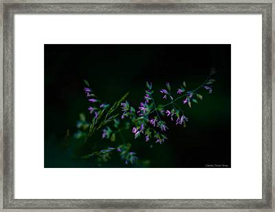 Framed Print featuring the photograph Dark Pink by Michaela Preston
