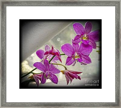Dark Pink Orchids All In A Row Framed Print by Eva Thomas