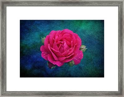 Dark Pink Rose Framed Print