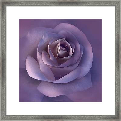 Dark Plum Rose Flower Framed Print by Jennie Marie Schell