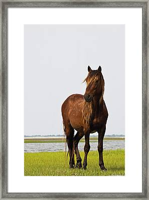 Dark Stallion Framed Print