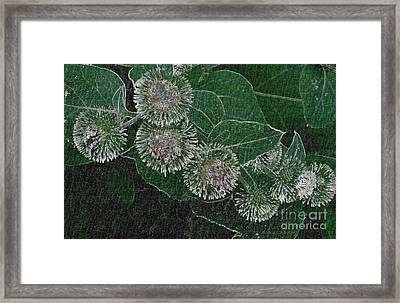 Framed Print featuring the photograph Dark Thistles by Kathie Chicoine