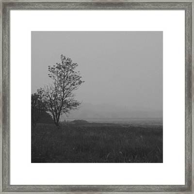 Dark Tree Framed Print