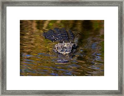 Dark Water Predator Framed Print
