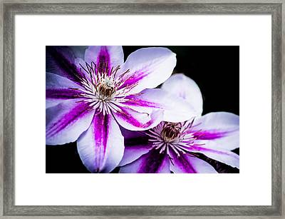 Darkness And Light Framed Print by Shelby Young