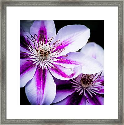 Darkness And Light Square Framed Print by Shelby Young