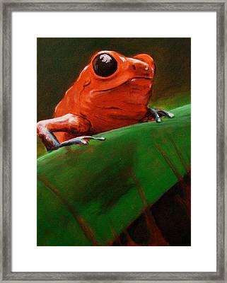 Dart Frog Framed Print by Brian Carlton
