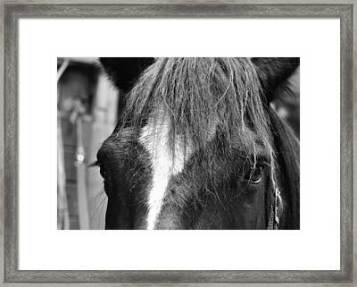 Dart Framed Print by JAMART Photography