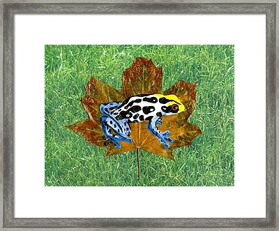 Dart Poison Frog Framed Print by Ralph Root