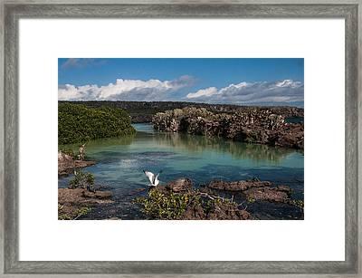 Darwin Bay     Genovesa Island      Galapagos Islands Framed Print