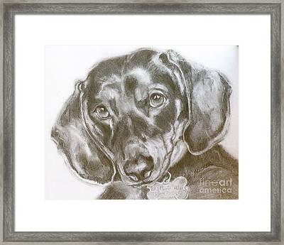Daschund Pencil Drawing Framed Print