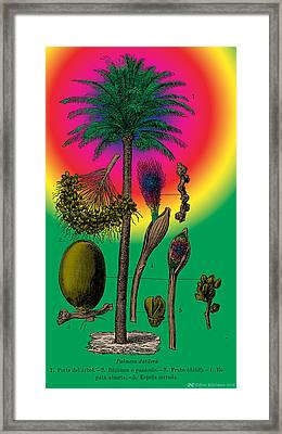 Date Palm Framed Print