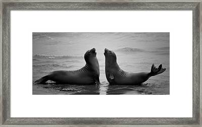 Dating Framed Print by C.s.tjandra