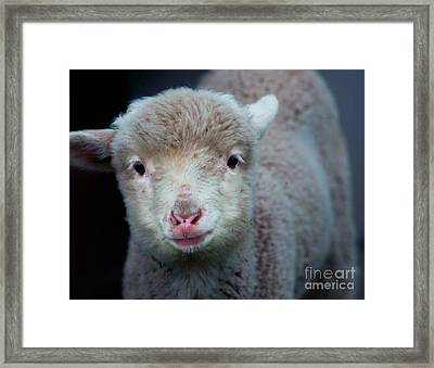 Dave The Sheep  Framed Print