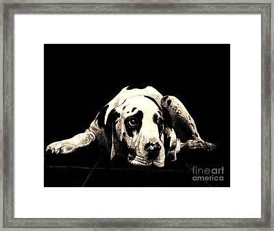 Dawg Framed Print by Andy  Mercer